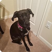 Adopt A Pet :: Baltia - Austin, TX