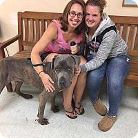Adopt A Pet :: Maverick - Franklinville, NJ
