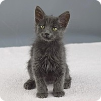 Adopt A Pet :: Norway - Columbia, IL
