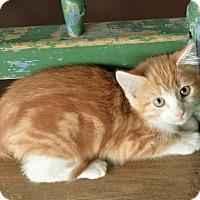 Adopt A Pet :: Mario - San Antonio, TX