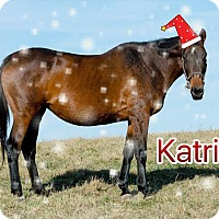 Adopt A Pet :: Holiday Special-Katrina $50 - Nicholasville, KY