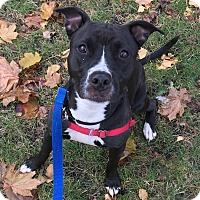 Adopt A Pet :: Claudia - Oak Park, IL