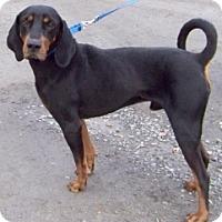 Adopt A Pet :: DARBY - Albany, NY