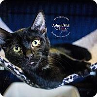Adopt A Pet :: A..  Dagan - Mooresville, NC