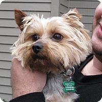Adopt A Pet :: Zeus - Salem, OR
