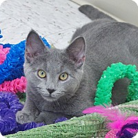Adopt A Pet :: Smurf - Chambersburg, PA