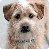 Adopt A Pet :: Flannery - San Diego, CA