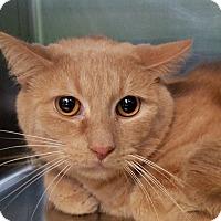 Adopt A Pet :: Simba - Elyria, OH