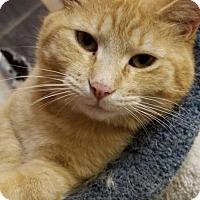 Adopt A Pet :: Willie - Washington, VA