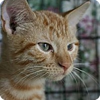 Adopt A Pet :: Alex - Frederick, MD