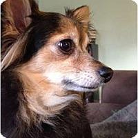 Adopt A Pet :: Ava - Garwood, NJ