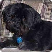 Adopt A Pet :: Jesse James & Mickey Spatz - Mays Landing, NJ