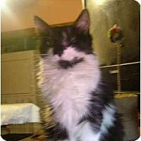 Adopt A Pet :: Justina - Bedford, MA