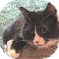 Adopt A Pet :: Desi - Vancouver, BC