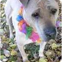 Adopt A Pet :: Buela - Sacramento, CA