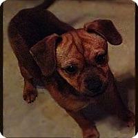 Adopt A Pet :: Kennedy - Hazard, KY
