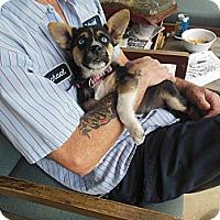 Adopt A Pet :: Bonnie Blue - Cincinnati, OH