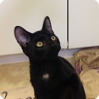 Adopt A Pet :: Doby - Deerfield Beach, FL