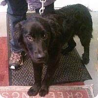 Adopt A Pet :: Miles - Oberlin, OH