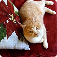 Adopt A Pet :: Roman - St. Charles, MO