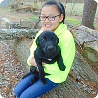 Adopt A Pet :: Anakin - Greeneville, TN