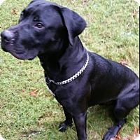 Adopt A Pet :: Max - McKenna, WA