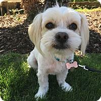 Adopt A Pet :: Shaggy - Fullerton, CA