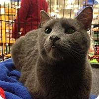 Adopt A Pet :: Axel - Ephrata, PA