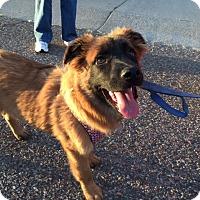 Adopt A Pet :: Woofy - Phoenix, AZ