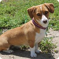 Adopt A Pet :: Rory - Palo Alto, CA