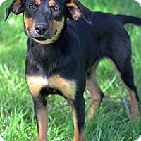 Adopt A Pet :: Dahlia - Waldorf, MD