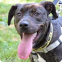 Adopt A Pet :: Marisa Tomei - Jersey City, NJ