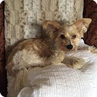 Adopt A Pet :: Leonardo - Richardson, TX