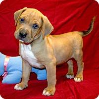 Adopt A Pet :: 16-d05-063 Hauser - Fayetteville, TN