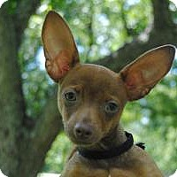 Adopt A Pet :: Tyke - Berkeley Heights, NJ
