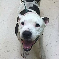 Adopt A Pet :: Mookie - Pompano beach, FL