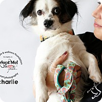 Adopt A Pet :: Charlie - Sherman Oaks, CA