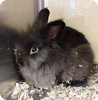 Other/Unknown Mix for adoption in Lake Elsinore, California - Ronnie