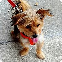 Adopt A Pet :: Jiminy Cricket - Jacksonville, NC