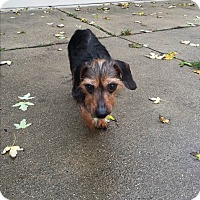 Adopt A Pet :: Queenie - Garden City, MI