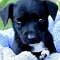 Adopt A Pet :: PEPE(TINY