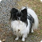 Adopt A Pet :: Bitsy (in New Hampshire)