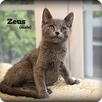 Adopt A Pet :: Zeus - Glen Mills, PA