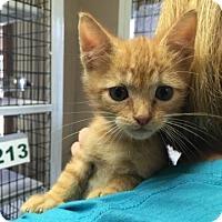 Adopt A Pet :: Raymond - Freeport, FL