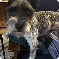 Adopt A Pet :: Dudley - Providence, RI