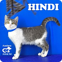 Domestic Shorthair Kitten for adoption in Carencro, Louisiana - Hindi
