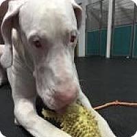 Adopt A Pet :: Vinnie - Springfield, IL