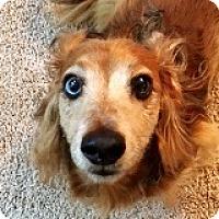 Adopt A Pet :: Hogan Hoffmann - Houston, TX