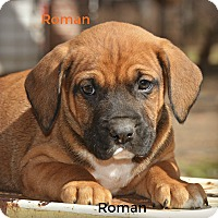 Adopt A Pet :: Roman~adopted! - Glastonbury, CT