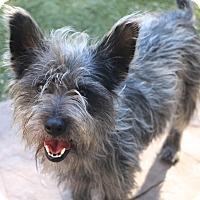 Adopt A Pet :: Jefferson - Woonsocket, RI